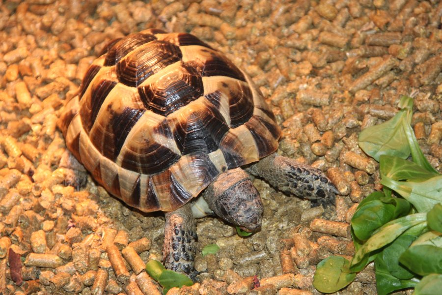 Getting started with your Mediterranean tortoise